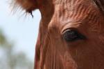 IMG_0671_horsehead