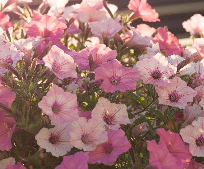 my-neighbors-flowers