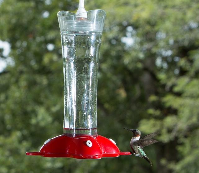 hummingbird_2b