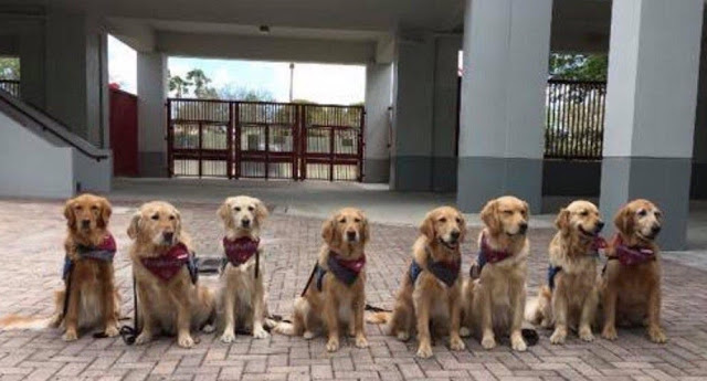dogs copy.jpg